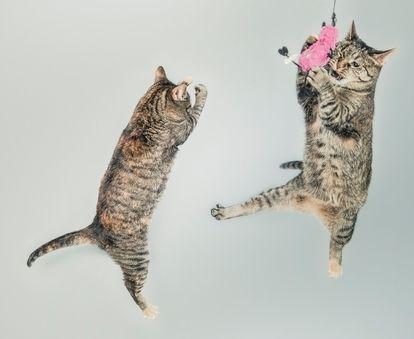 Was ist Jumping Fitness - und geht das auch zuhause? 1