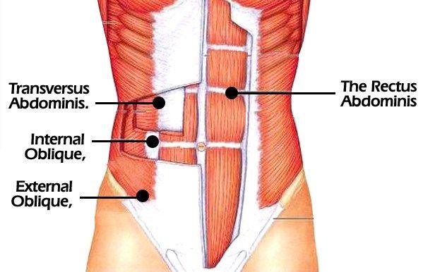 Bauchmuskelübungen: Alles zu Bauchmuskeln und zum Sixpack 4